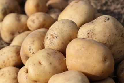 小学校で栽培したジャガイモで食中毒、なぜ起こりやすい?