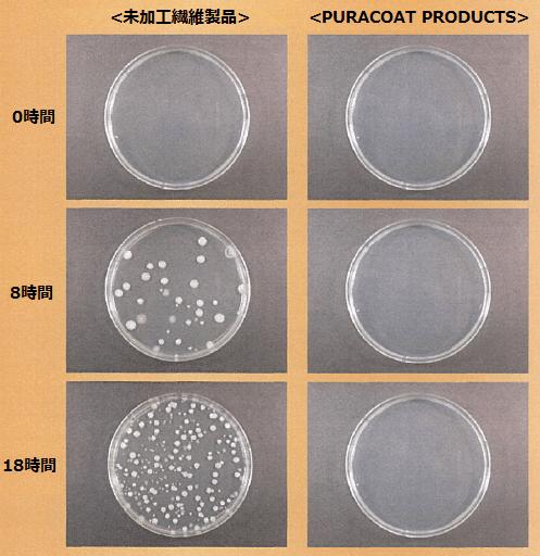 ピュアコート繁殖実験