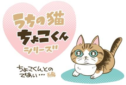 「ちょこくんとの出会い」#うちの猫ちょこくんシリーズ