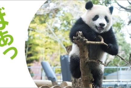 上野動物園のパンダ「シャンシャン」に癒される!絵本『だいすきシャンシャン』と『おでかけミニえほん とことこシャンシャン』が2018年6月12日に2冊同時発売