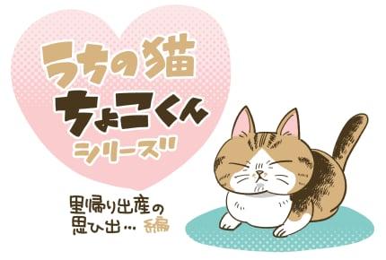 「里帰り出産のためちょこくんと一時の別れ」  #うちの猫ちょこくんシリーズ