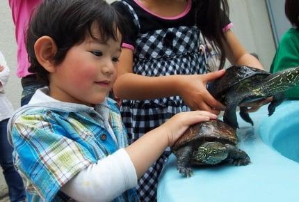 息子がミドリガメを拾ってきたら、あなたは飼いますか?生き物を責任をもってお世話することで分かること