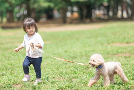赤ちゃんのために愛犬を処分しろという義母……。絶対に守りたい!対抗策はある?