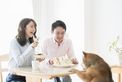 同じテーブルで犬と人間が食事をする義実家。生後6か月の赤ちゃんを連れて行きたくない