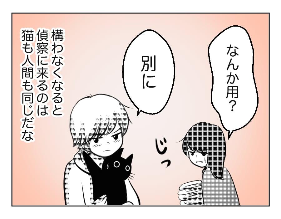 【11歳息子と猫】諦めも大事 #4コマ母道場
