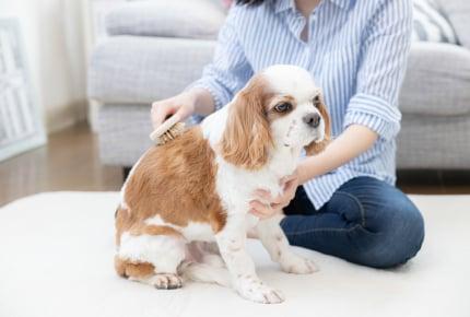 小学2年生の子どもが「ひとりで寂しいから犬を飼いたい」と言う。「寂しい」だけでペットを飼ってもいいの?