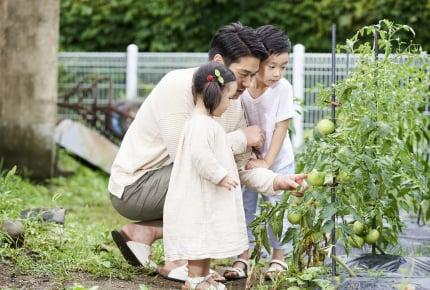 家庭菜園で作っている野菜はなんですか?ママたちが選んだものとは