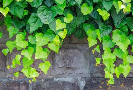 隣の家から植物のツルが伸びてきたら気になる?ママたちからは厳しい意見も!