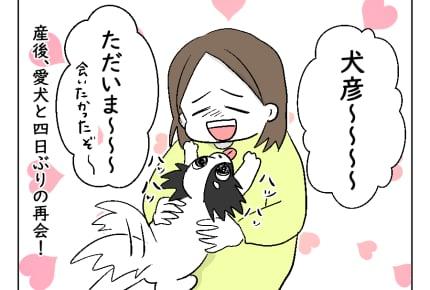 【どすこいママ育児7・8話】わが家の愛犬、新生児の赤ちゃんとご対面 #4コマ母道場