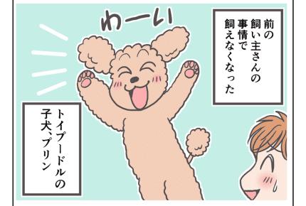 【娘と愛犬プリンの成長記1・2話】子犬と赤ちゃん、仲良くなれるかな? #4コマ母道場