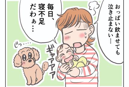 【娘と愛犬プリンの成長記】赤ちゃんと犬育て、両立は大変だ! #4コマ母道場