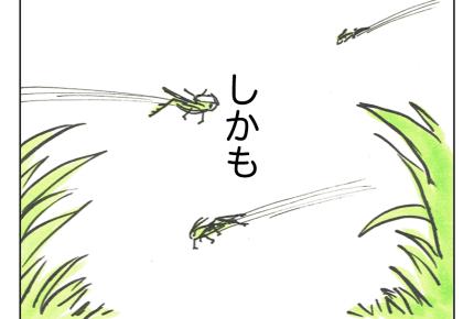 【沖縄でワンオペ15話】まるでジャングル!?沖縄の散歩道 #4コマ母道場