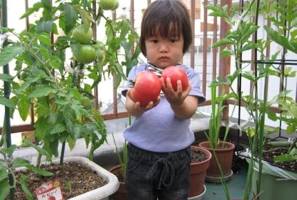 【子どもと一緒に楽しむ家庭菜園01】初心者はどんな野菜を選べばいい?大人の意外な盲点とは