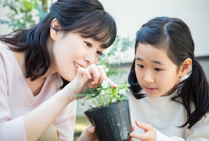 【子どもと一緒に楽しむ家庭菜園04】野菜がうまく育たない?良い苗の選び方と植え方のポイント
