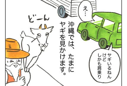 【沖縄でワンオペ】日常的に過ごしている、ヤギたち!「すごい!」そして……親しみのヤギ【第57話】