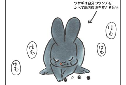 【沖縄でワンオペ】動物とともにある暮らし。うさぎから娘への贈りもの?【第58話】