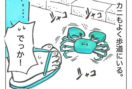 【沖縄でワンオペ】沖縄らしさ?生き物好きの私でもひるむ……予想外の数とビジュアル!【第59話】