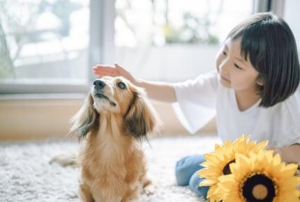 「命の大切さを学んでほしい」だけでペットを飼っても大丈夫?家族がペットを飼いたいといったときに考えたいこと