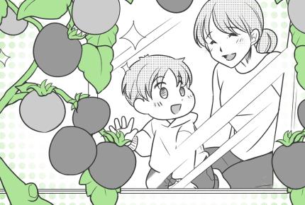 【子どもと一緒に楽しむ家庭菜園07】いよいよ収穫!でもトマトの実が割れるアクシデントに親子でガッカリ