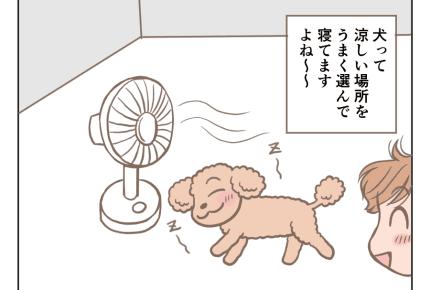 <夏真っ盛り>暑くてもお昼寝は愛犬と一緒がいい!【娘と愛犬プリンの成長記25話】#4コマ母道場